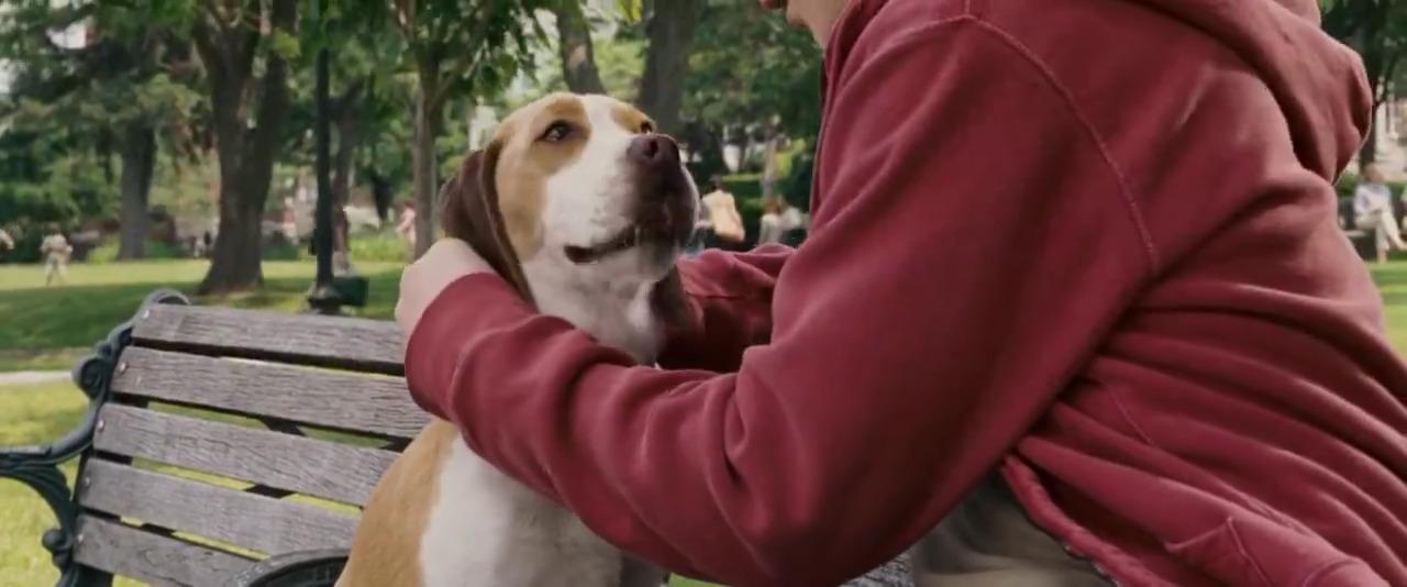 تماشای آنلاین فیلم Underdog 2007 آندرداگ با دوبله فارسی