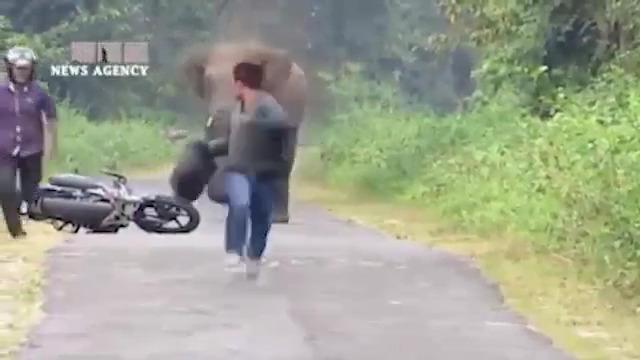فرار انسانها از دست حیوانات