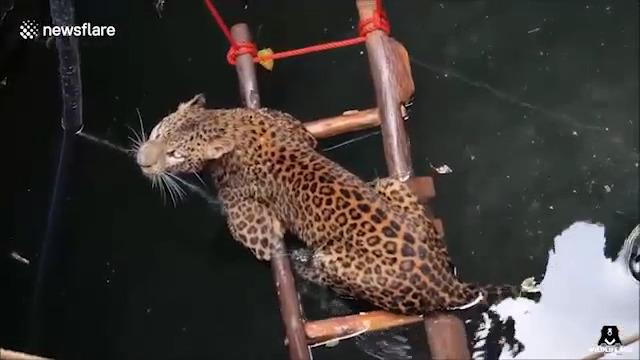 نجات یک پلنگ از چاه سی متری