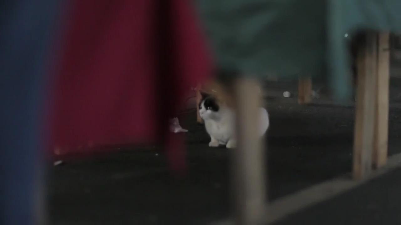 تماشای آنلاین مستند Kedi 2016 گربه دوبله فارسی
