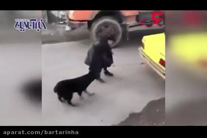 بستن یک سگ به تاکسی بیاعتنا به فریادهای مردم! (۱۶+)